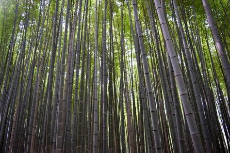 bosque_bambu